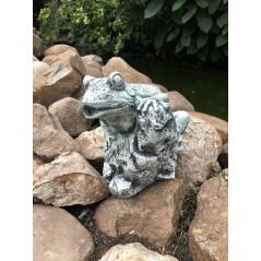 Žába na kamenu