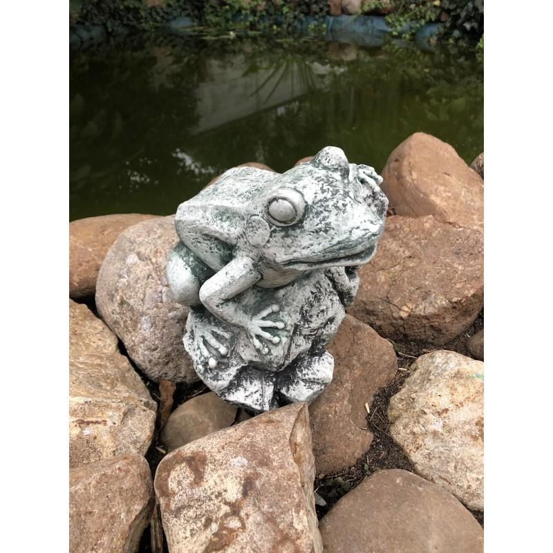 Žabák na kamenu