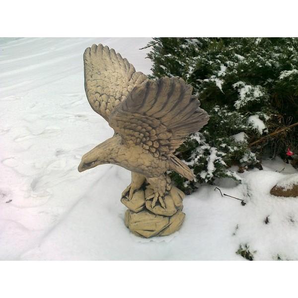 Orel letící nový